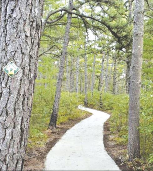 The new accessible trail in the Ossipee Pine Barrens